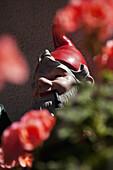 Detail of a garden gnome