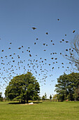 A flock of birds flying over trees in a park during summertime