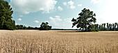 Vast hay fields in Czech Republic