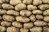 Full frame shot of muddy potatoes