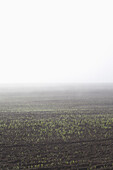 View of agricultural field in foggy weather against clear sky
