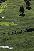 Hikers walking along a green mountainside