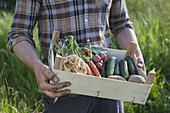 Midsection of mature man carrying crate of freshly harvested vegetables at garden