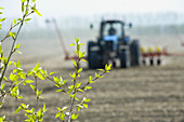 Close-up of plant and in background combine harvester harvesting field