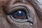 Close -up of horse eye