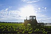 Combine harvester harvesting crop