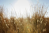 Wild grass in meadow