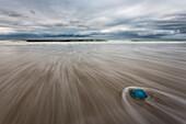 Blue Jellyfish on the beach, Sylt, North Sea, Nordfriesland, Schleswig-Holstein, Germany