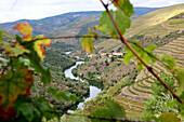 Weinanbau im Tal bei Tabuaco über dem Dourotal, Norte, Portugal
