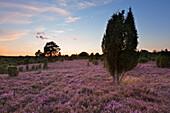 Abendrot, Lüneburger Heide, Niedersachsen, Deutschland