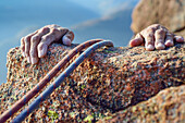 Two hands of a woman holding onto red Granite rock while climbing, Mottarone, Piedmont, Italy