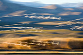 Snow Geese flight, abstract, Bosque del Apache, Anser caerulescens atlanticus, Chen caerulescens, New Mexico, USA