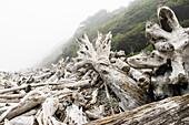 driftwood on the Pacific coast, Olympic Nationalpark, Washington, USA