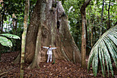Giant tree with buttress roots in the rainforest at Tambopata river, Tambopata National Reserve, Peru, South America