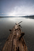 Driftwood in the water, Douglas County, Oregon, USA