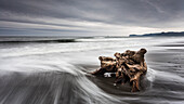 Coastal landsape, Jefferson County, Olympic National Park, Highway 101, Pacific, Washington, West Coast, USA