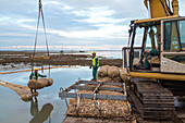 excavator, reinforcing areas around the salt marshes of the Lagoon to avoid erosion, barene, Venice, Italy