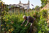 garden plots for senior citizens, former monastery garden, Venice, Italy