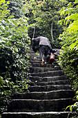 Vietnam, Ha Long bay on land, Ninh Binh, karstic rocks landscape, woman climbing a stair.
