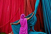 India, Rajasthan, Sari Factory, Textile are dried in the open air. Collecting of dry textile are folded by women and children. The textiles are hung to dry on bamboo rods. The long bands of textiles are about 800 metre in length.