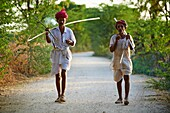 India, Rajasthan, Nimaj village around Jodhpur, Rabari shepherd.