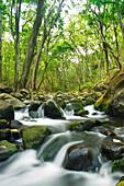 Hawaii, Maui, Olowalu, Stream Flowing Through Lush Olowalu Valley.