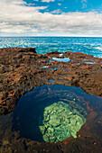 Hawaii, Lanai, Manele Bay, Tide Pool On Rocks In Hulopo'e Bay