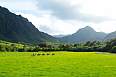 Hawaii, Oahu, Kualoa Ranch, Horseback Riders In An Open Field. (Editorial Use Only)