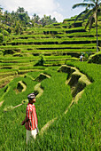 Indonesia, Bali, Rice Paddies, Worker In Foreground.