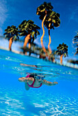 [Dc] Over/Under Girl Swimming Underwater With Goggles, Palms Background Blue Sky