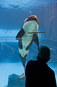 Orca And Window Washer At A Marine Park, Ontario, Canada