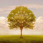 Tree In Field, Saint John, New Brunswick