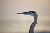 A Bird On The Beach, Sarasota, Florida