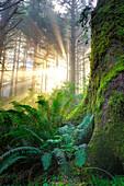 Pacific Coast Forest, Oregon, Usa
