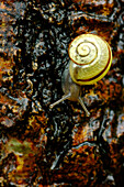 Snail, Pointe-Des-Cascades, Quebec, Canada
