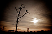 Single Bird Resting In A Tree At Big Lagoon State Park, Pensacola, Florida