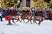Two People On Skis Are Being Pulled By Reindeer During The *Reindeer Races* During Fur Rendezvous In Anchorage, Alaska