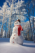 Snowman With Red Scarf And Black Top Hat Standing In Front Of Snow Covered Birch Forest, Winter, Eagle River, Alaska, Usa.