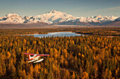 View Of A Cessna 185 Floatplane In Flight With Mt. Mckinley In The Background, Southside, Southcentral Alaska, Fall