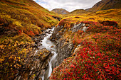 Small Stream Through The Fall Colored Tundra In Hatcher Pass, Southcentral, Alaska