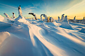 Wind blown snow patterns and snowloaded spruce trees, Interior Alaska.