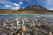 Caribou antlers in the Marsh Fork of the Canning river in the Arctic National Wildlife Refuge, Brooks range mountains, Alaska.