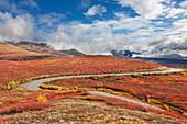 Denali park road winds through the crimson tundra of Denali National Park, Interior Alaska