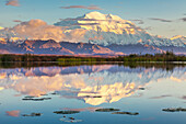 Mt McKinley reflects in a small tundra pond with lily pads, sunset in Denali National Park, Alaska.