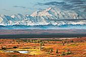 Mt McKinley (Denali) North America's tallest mountain (20,320 ft), moose and tundra pond, Denali National Park, interior, Alaska.
