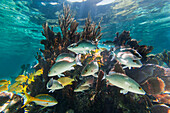 'Crystal clear underwater scenes from Laughing Bird Caye National Park; Belize'