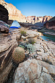 'Blacktail camp along the Colorado River, Grand Canyon National Park; Arizona, United States of America'