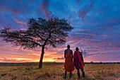 'Two Masai tribesman at dawn on the African savannah by an umbrella acacia tree, Masai Mara; Kenya'