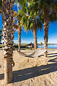 'Hammock on the beach along the Baja Peninsula; Mexico'