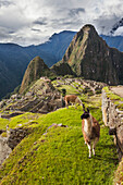 'Peak of Huaynapicchu (young mountain) at Machu Picchu, the ancient lost city of the Incas, one of Peru's top tourist destinations; Peru'